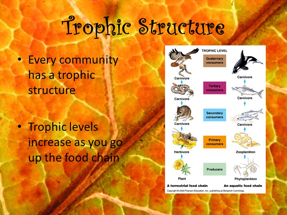 Trophic Structure Every community has a trophic structure Trophic levels increase as you go up the food chain
