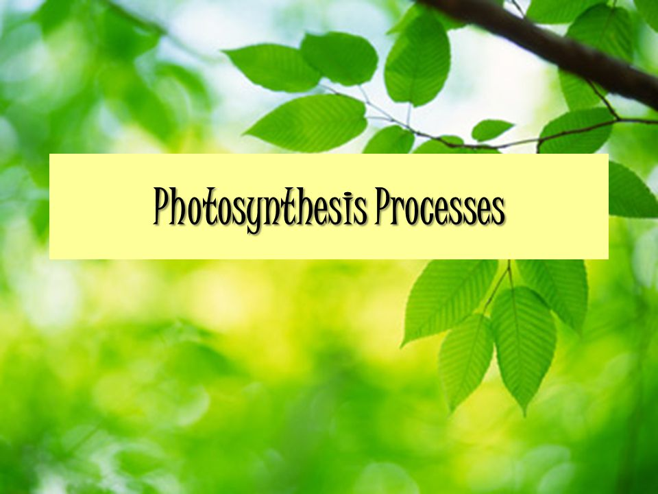 Photosynthesis Processes