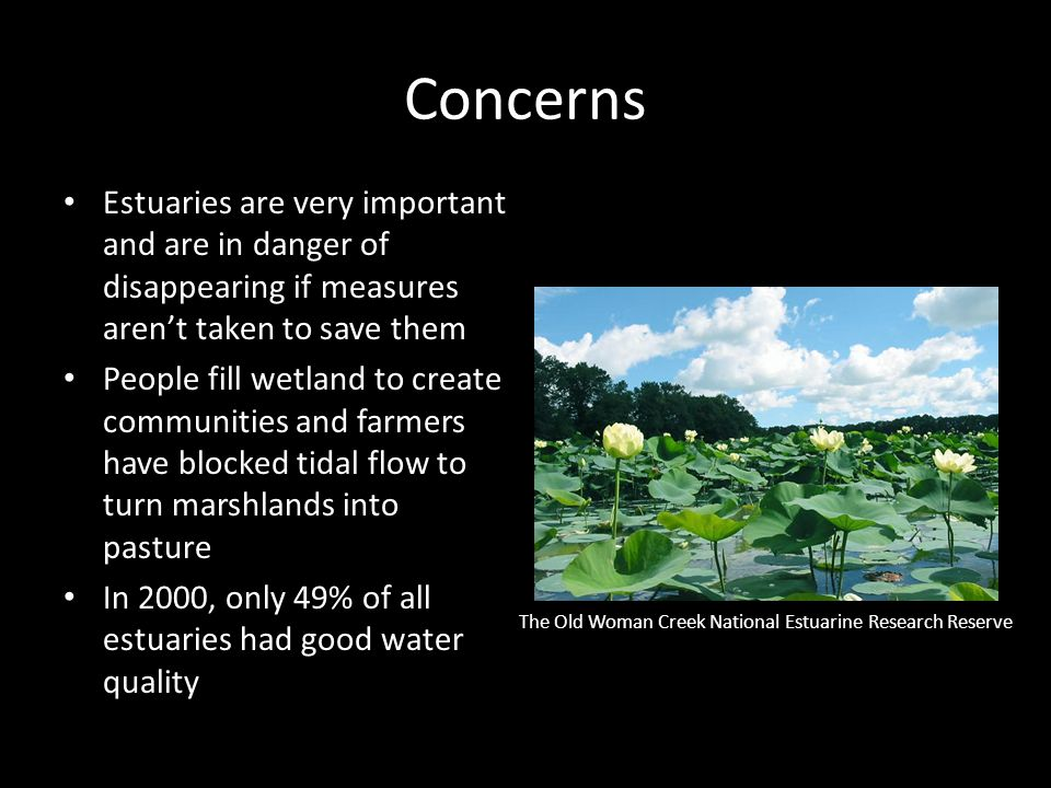 Concerns Estuaries are very important and are in danger of disappearing if measures aren't taken to save them People fill wetland to create communitie