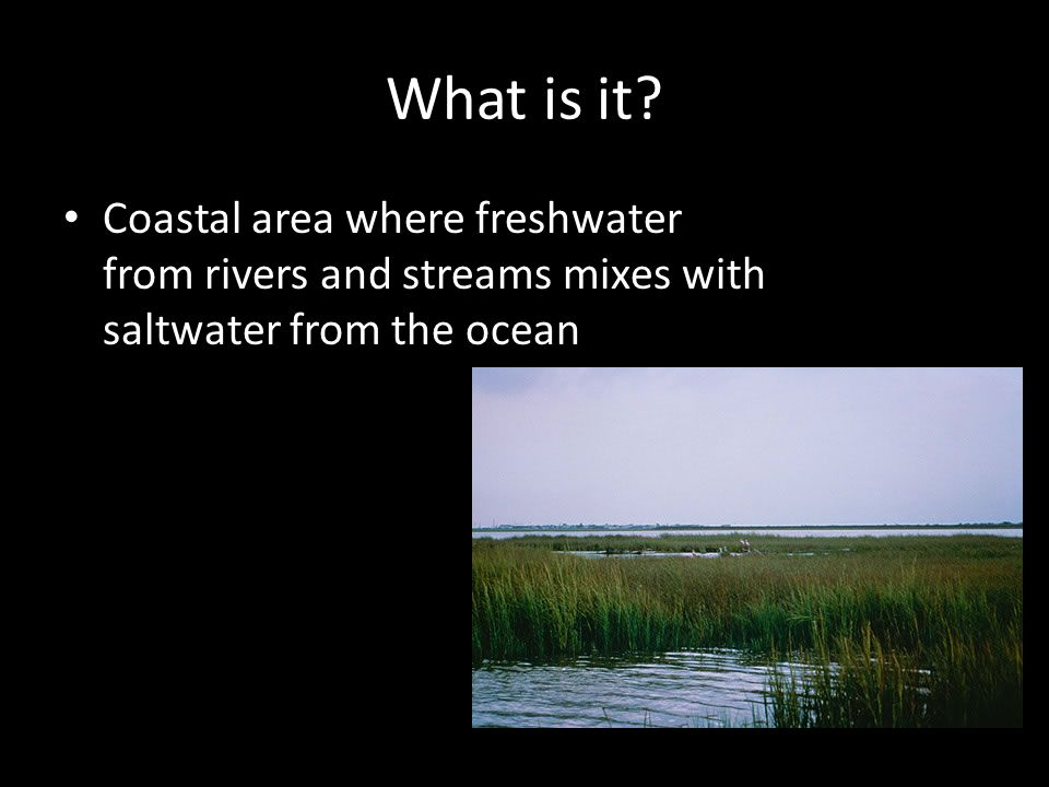 What is it? Coastal area where freshwater from rivers and streams mixes with saltwater from the ocean