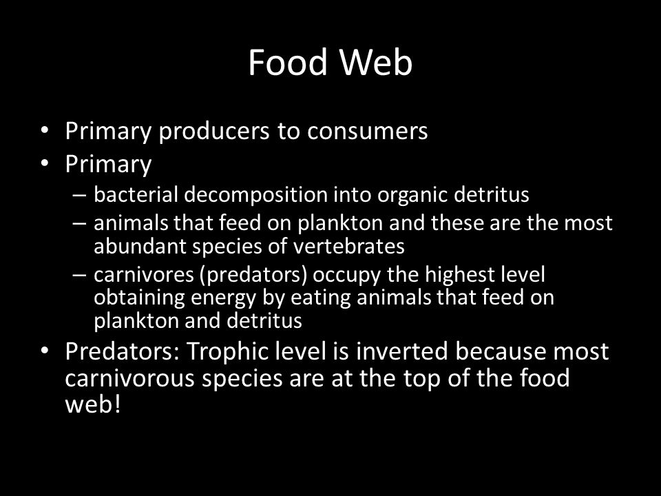 Food Web Primary producers to consumers Primary – bacterial decomposition into organic detritus – animals that feed on plankton and these are the most abundant species of vertebrates – carnivores (predators) occupy the highest level obtaining energy by eating animals that feed on plankton and detritus Predators: Trophic level is inverted because most carnivorous species are at the top of the food web!