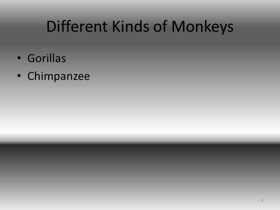 Different Kinds of Monkeys Gorillas Chimpanzee 8