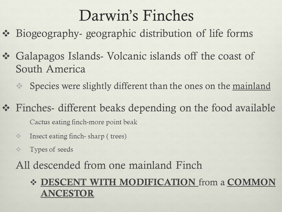 Charles Darwin Theory Of Evolution Finches Darwin s Finches