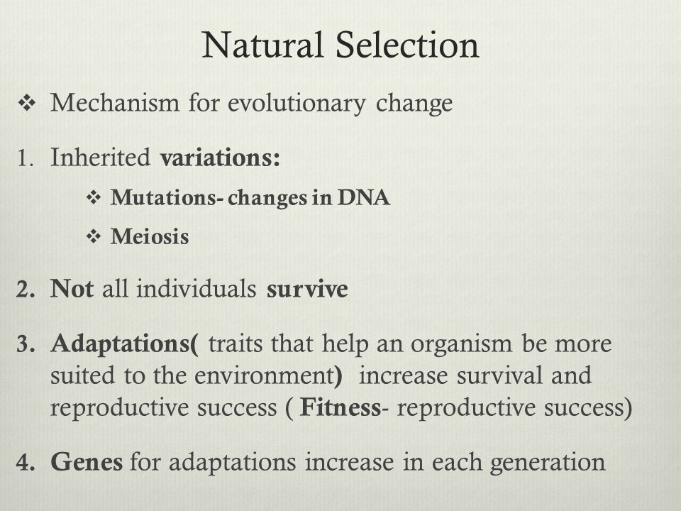 Natural Selection  Mechanism for evolutionary change 1. Inherited variations:  Mutations- changes in DNA  Meiosis 2. Not all individuals survive 3.