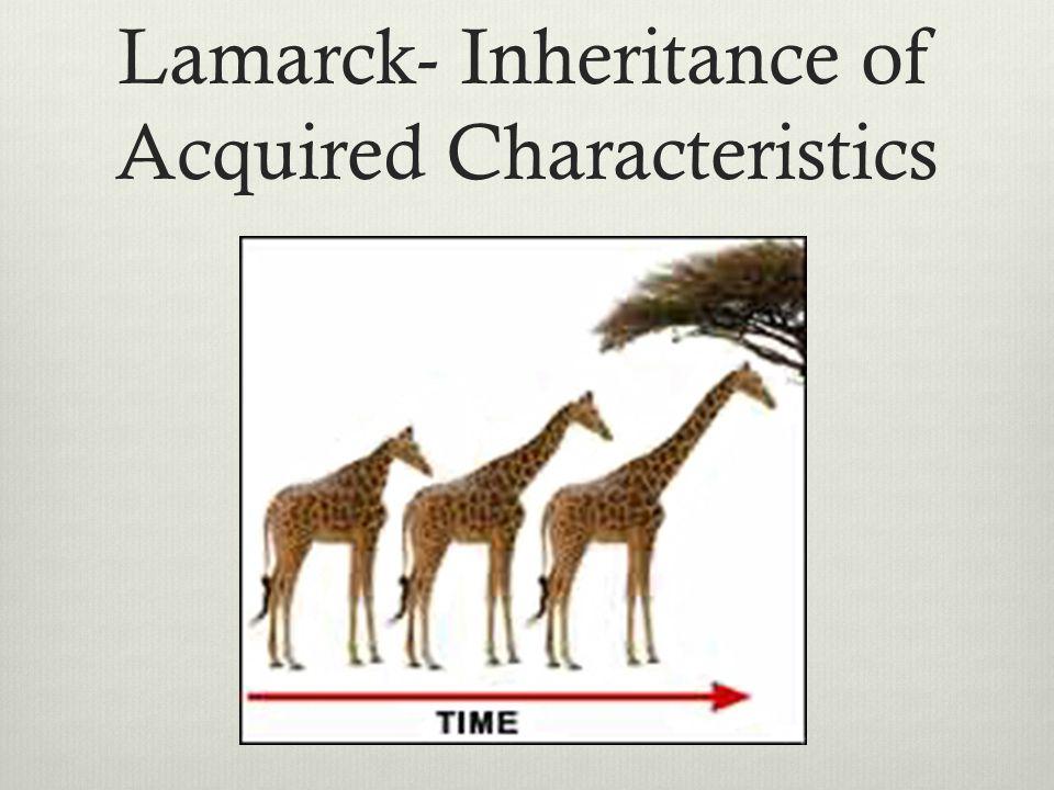 Lamarck- Inheritance of Acquired Characteristics