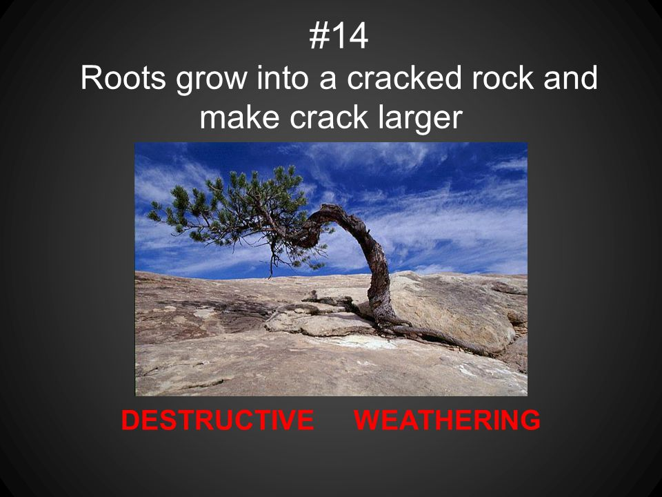 DESTRUCTIVE WEATHERING #14 Roots grow into a cracked rock and make crack larger