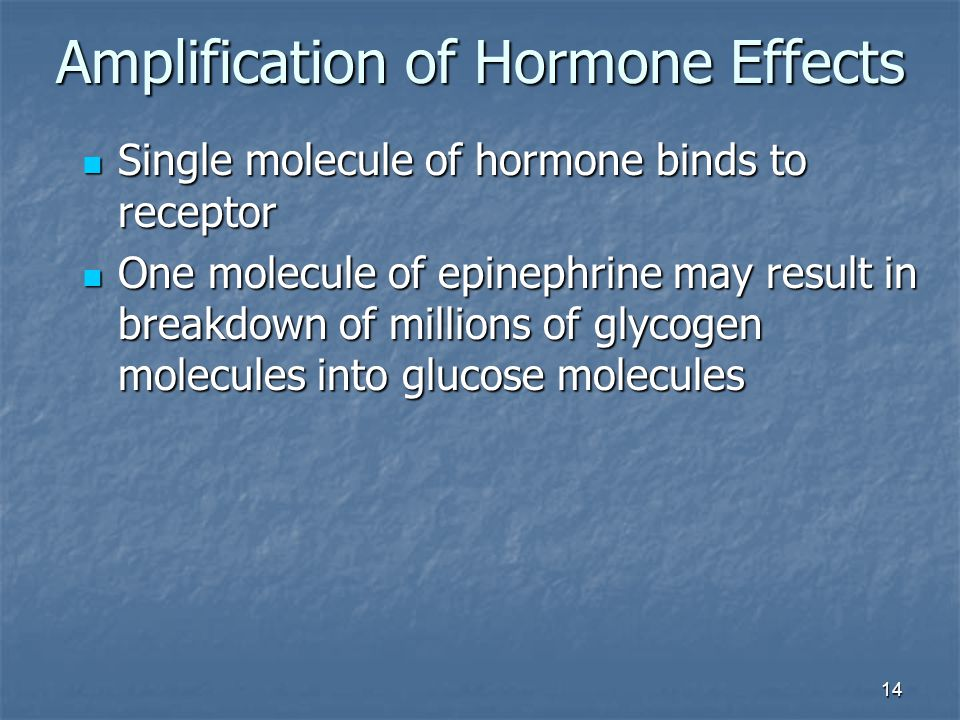 14 Amplification of Hormone Effects Single molecule of hormone binds to receptor Single molecule of hormone binds to receptor One molecule of epinephr