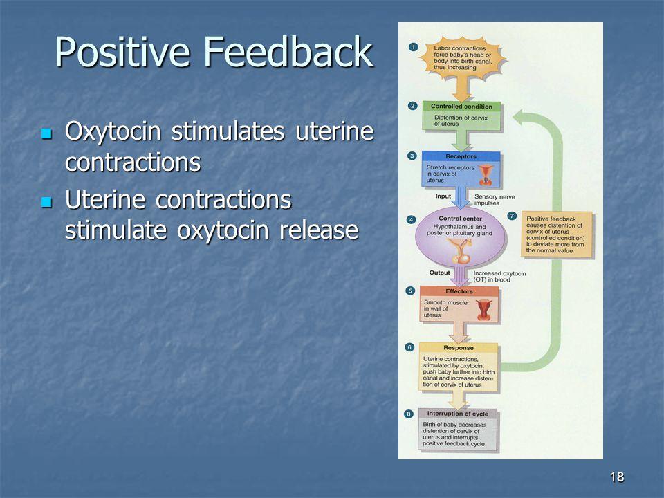 18 Positive Feedback Oxytocin stimulates uterine contractions Oxytocin stimulates uterine contractions Uterine contractions stimulate oxytocin release