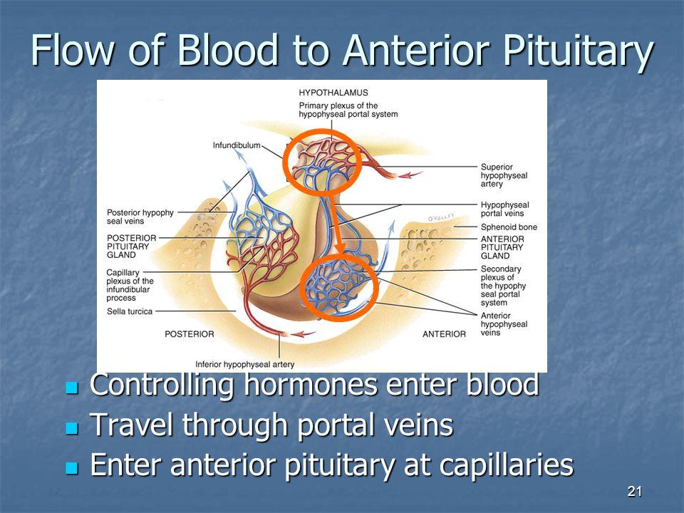 21 Flow of Blood to Anterior Pituitary Controlling hormones enter blood Controlling hormones enter blood Travel through portal veins Travel through po