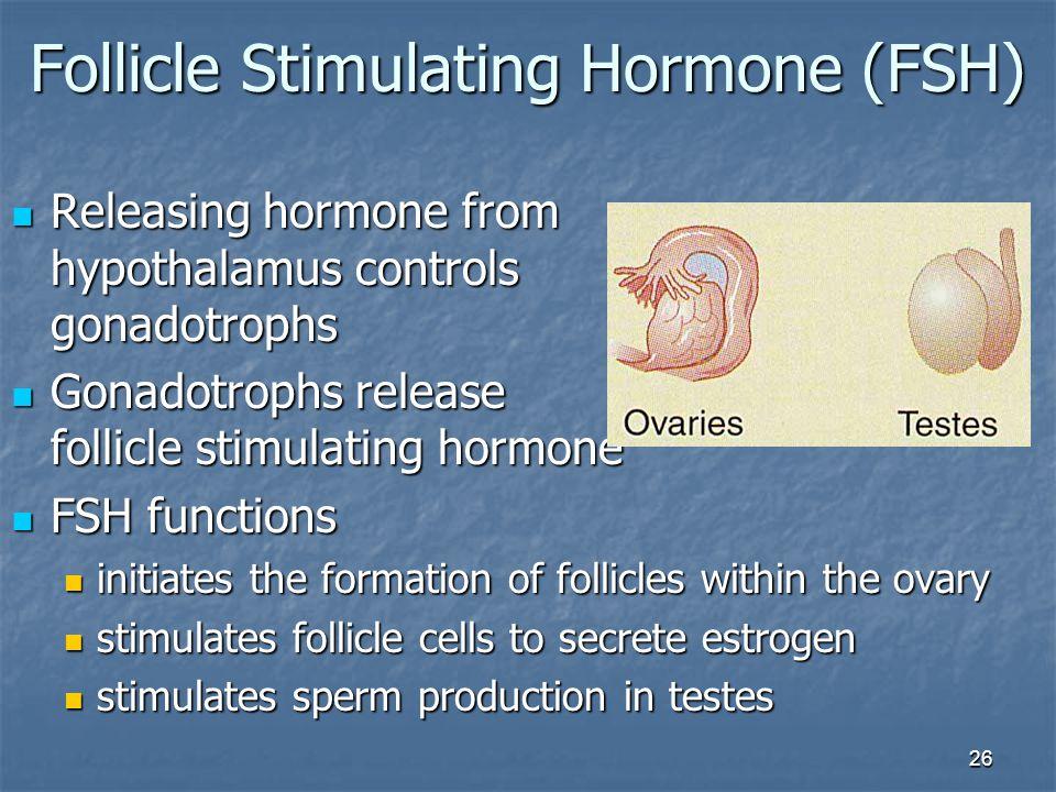 26 Follicle Stimulating Hormone (FSH) Releasing hormone from hypothalamus controls gonadotrophs Releasing hormone from hypothalamus controls gonadotro