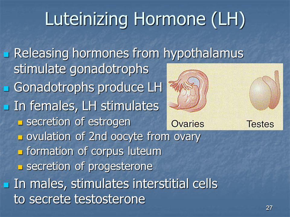 27 Luteinizing Hormone (LH) Releasing hormones from hypothalamus stimulate gonadotrophs Releasing hormones from hypothalamus stimulate gonadotrophs Go