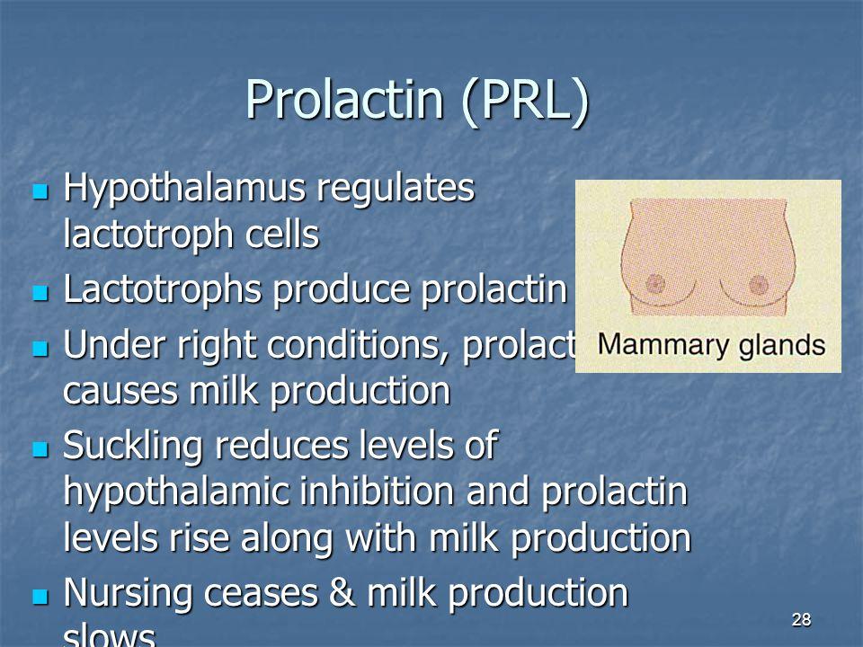 28 Prolactin (PRL) Hypothalamus regulates lactotroph cells Hypothalamus regulates lactotroph cells Lactotrophs produce prolactin Lactotrophs produce p