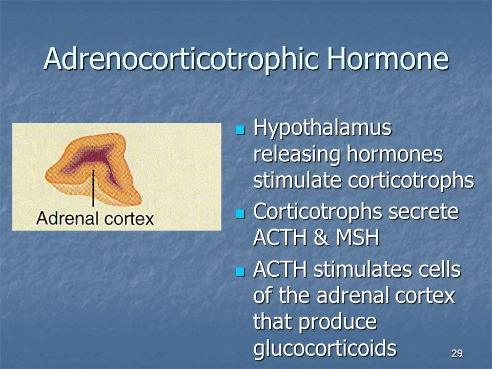 29 Adrenocorticotrophic Hormone Hypothalamus releasing hormones stimulate corticotrophs Hypothalamus releasing hormones stimulate corticotrophs Cortic