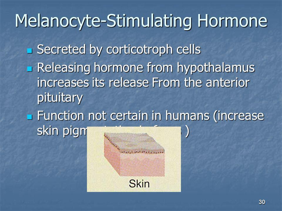 30 Melanocyte-Stimulating Hormone Secreted by corticotroph cells Secreted by corticotroph cells Releasing hormone from hypothalamus increases its rele