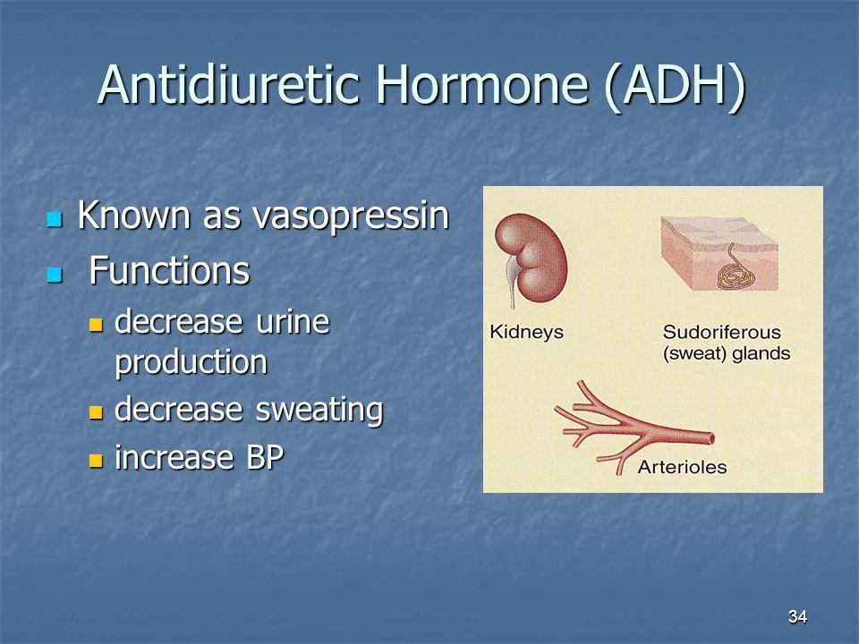 34 Antidiuretic Hormone (ADH) Known as vasopressin Known as vasopressin Functions Functions decrease urine production decrease urine production decrea