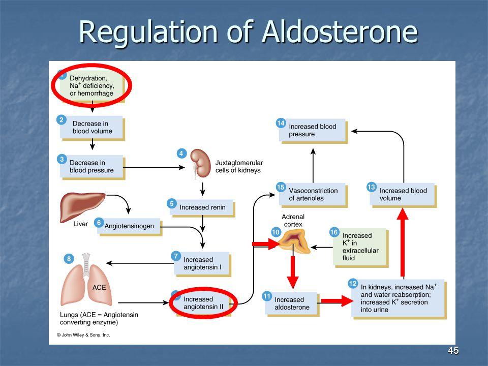 45 Regulation of Aldosterone
