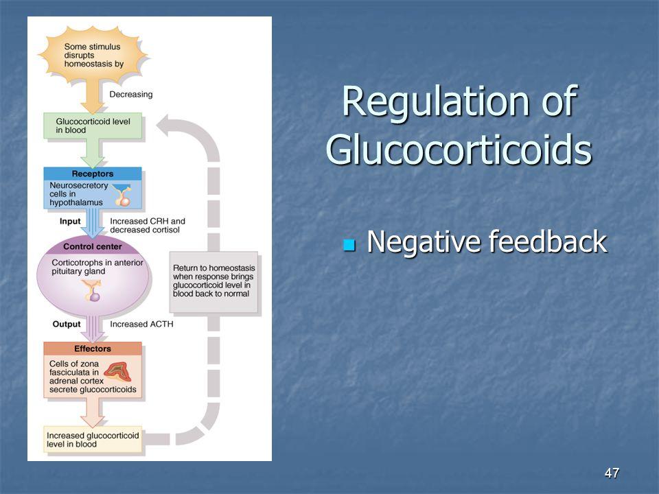 47 Regulation of Glucocorticoids Negative feedback Negative feedback