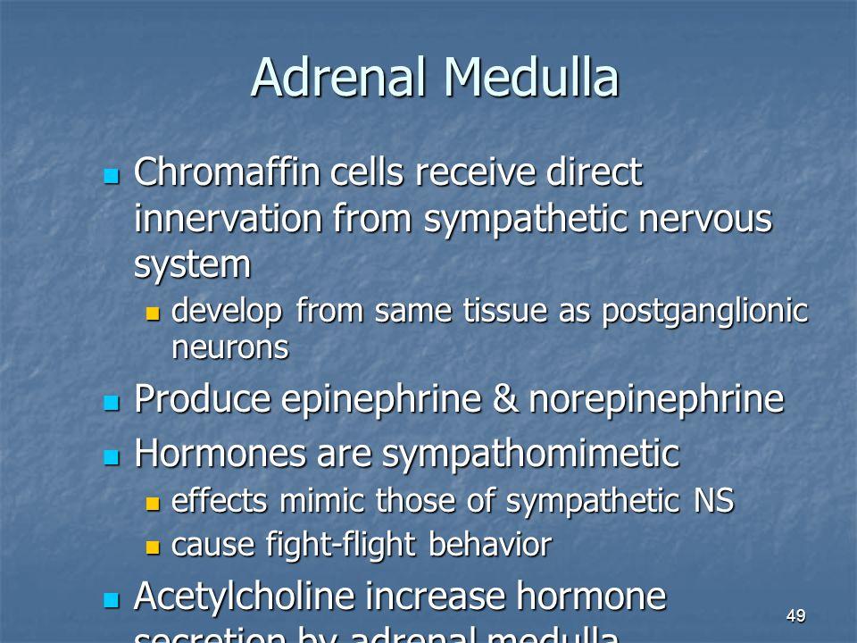 49 Adrenal Medulla Chromaffin cells receive direct innervation from sympathetic nervous system Chromaffin cells receive direct innervation from sympat