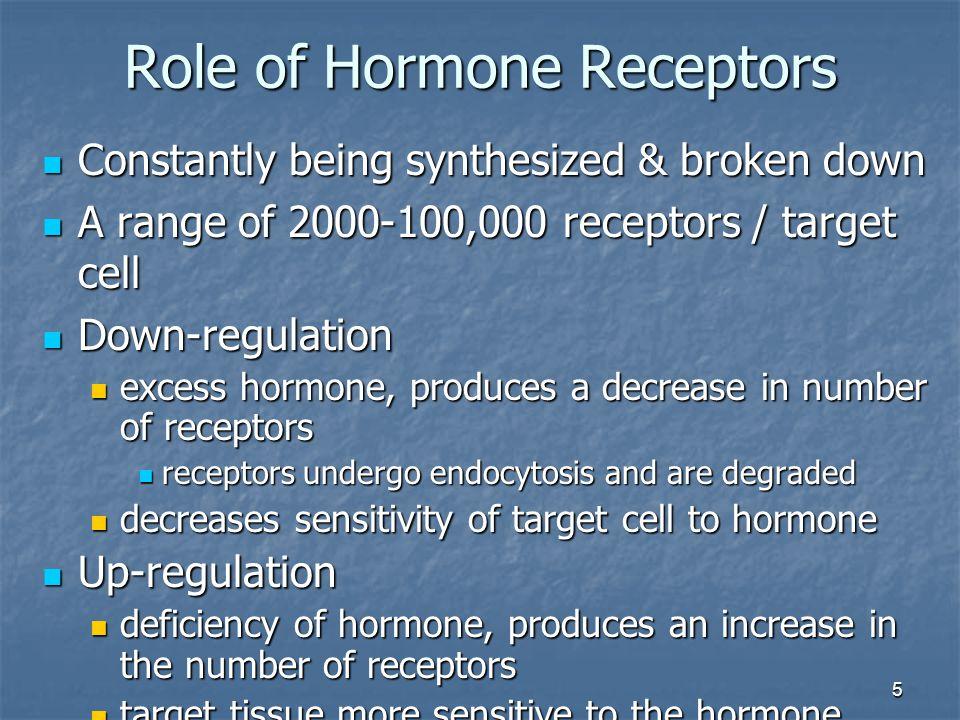 5 Role of Hormone Receptors Constantly being synthesized & broken down Constantly being synthesized & broken down A range of 2000-100,000 receptors /