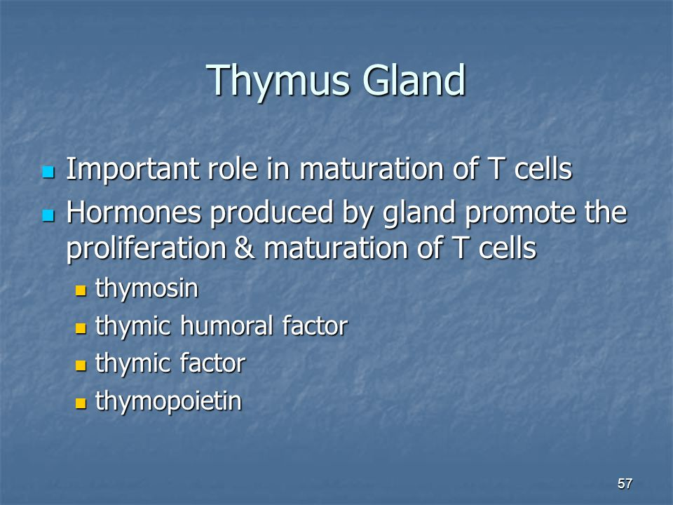57 Thymus Gland Important role in maturation of T cells Important role in maturation of T cells Hormones produced by gland promote the proliferation &