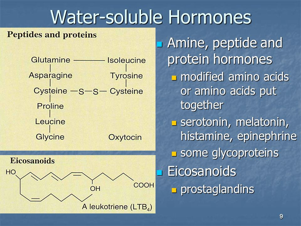 9 Water-soluble Hormones Amine, peptide and protein hormones Amine, peptide and protein hormones modified amino acids or amino acids put together modi