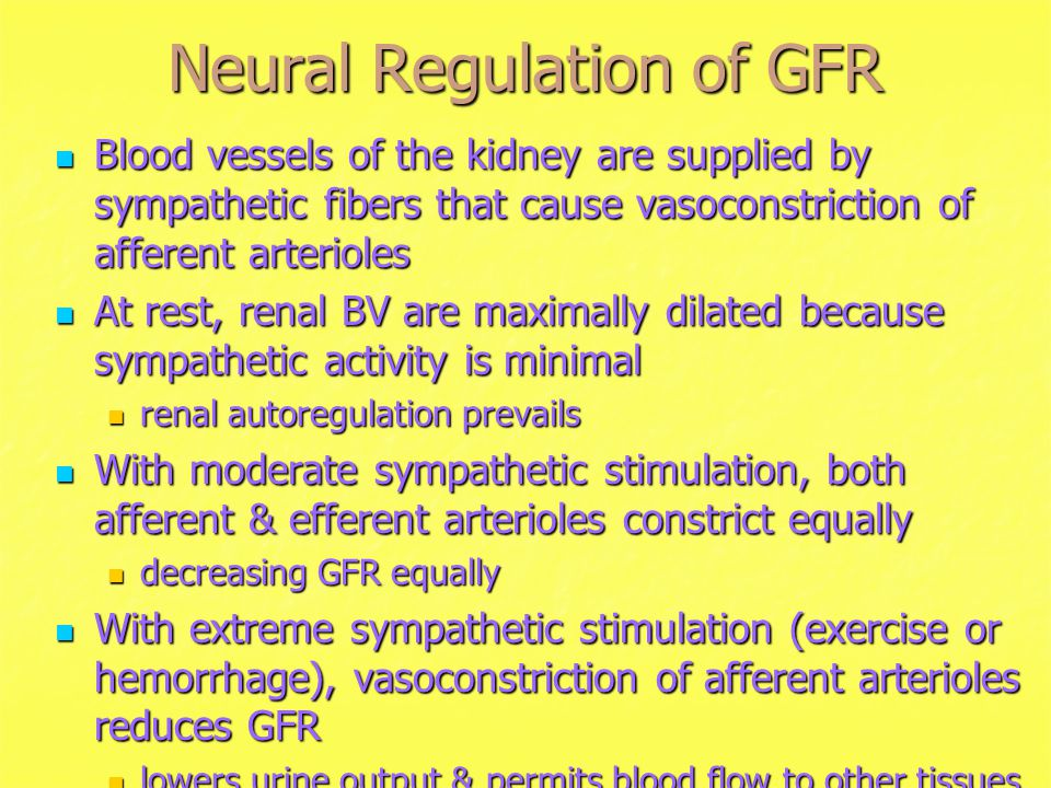 Neural Regulation of GFR Blood vessels of the kidney are supplied by sympathetic fibers that cause vasoconstriction of afferent arterioles Blood vessels of the kidney are supplied by sympathetic fibers that cause vasoconstriction of afferent arterioles At rest, renal BV are maximally dilated because sympathetic activity is minimal At rest, renal BV are maximally dilated because sympathetic activity is minimal renal autoregulation prevails With moderate sympathetic stimulation, both afferent & efferent arterioles constrict equally With moderate sympathetic stimulation, both afferent & efferent arterioles constrict equally decreasing GFR equally With extreme sympathetic stimulation (exercise or hemorrhage), vasoconstriction of afferent arterioles reduces GFR With extreme sympathetic stimulation (exercise or hemorrhage), vasoconstriction of afferent arterioles reduces GFR lowers urine output & permits blood flow to other tissues
