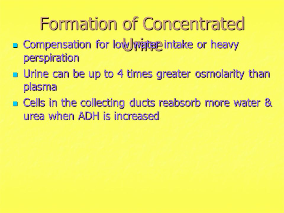 Formation of Concentrated Urine Compensation for low water intake or heavy perspiration Compensation for low water intake or heavy perspiration Urine can be up to 4 times greater osmolarity than plasma Urine can be up to 4 times greater osmolarity than plasma Cells in the collecting ducts reabsorb more water & urea when ADH is increased Cells in the collecting ducts reabsorb more water & urea when ADH is increased