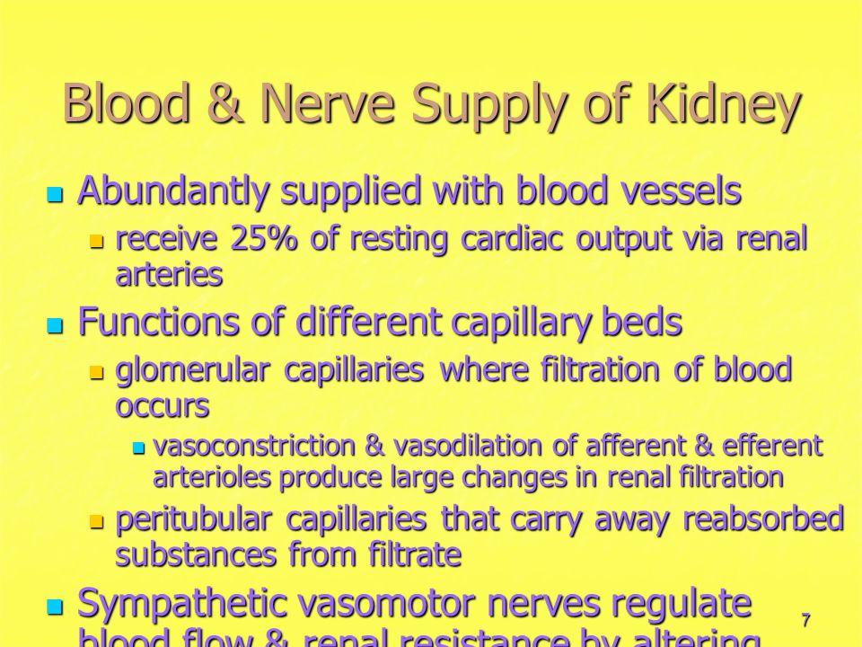 7 Blood & Nerve Supply of Kidney Abundantly supplied with blood vessels Abundantly supplied with blood vessels receive 25% of resting cardiac output v