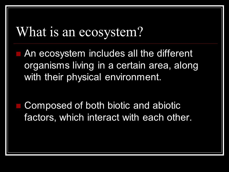 What is an ecosystem.