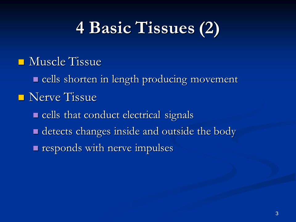 34 Connective Tissues Connective Tissues Cells rarely touch due to extracellular matrix Cells rarely touch due to extracellular matrix Matrix(fibers & ground substance secreted by cells Matrix(fibers & ground substance secreted by cells Consistency varies from liquid, gel to solid Consistency varies from liquid, gel to solid Does not occur on free surface Does not occur on free surface Good nerve & blood supply except cartilage & tendons Good nerve & blood supply except cartilage & tendons