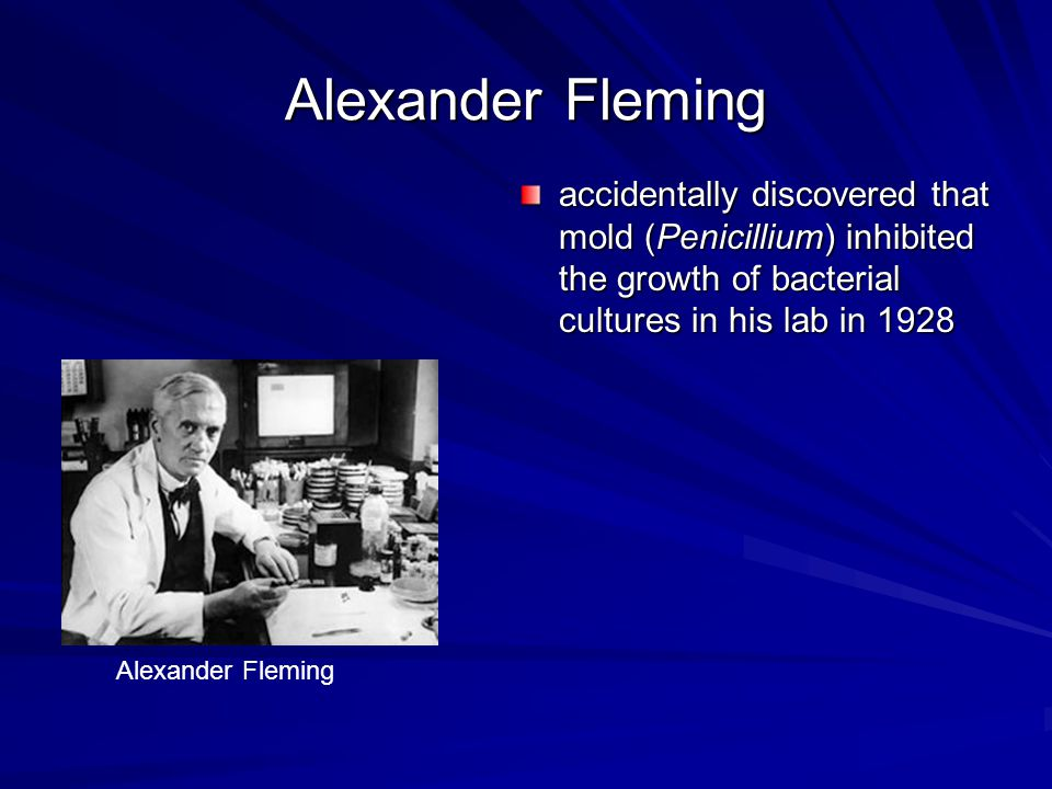 Alexander Fleming accidentally discovered that mold (Penicillium) inhibited the growth of bacterial cultures in his lab in 1928 Alexander Fleming