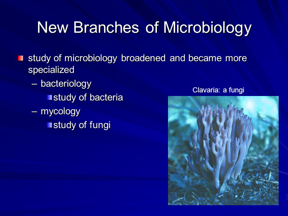 New Branches of Microbiology study of microbiology broadened and became more specialized –bacteriology study of bacteria –mycology study of fungi Clav