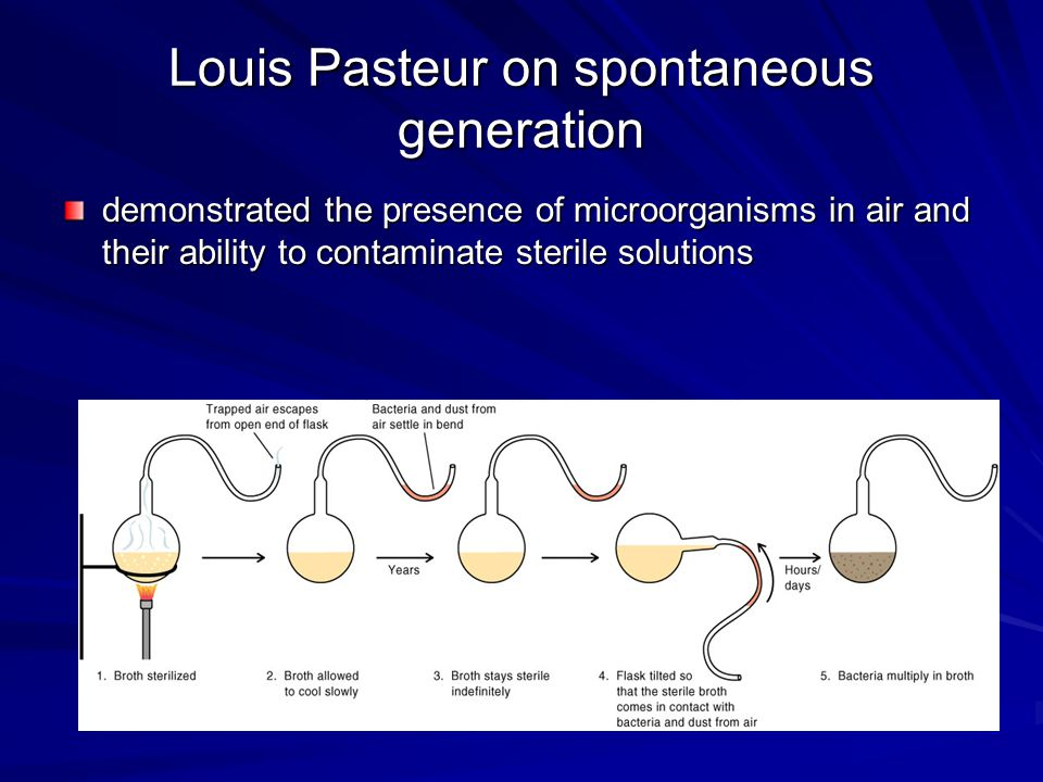 Spontaneous Generation proved that spontaneous is a result of the presence of microorganisms in the air or the fluids themselves
