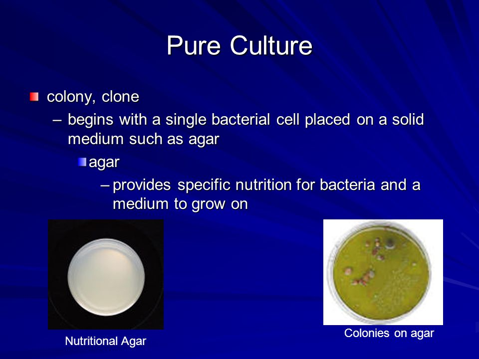 Bacterial Growth most lab organisms are grown in a batch culture –closed system new materials are not added waste products are not removed –under these conditions bacteria populations follow distinct patterns of growth Algae batch cultures