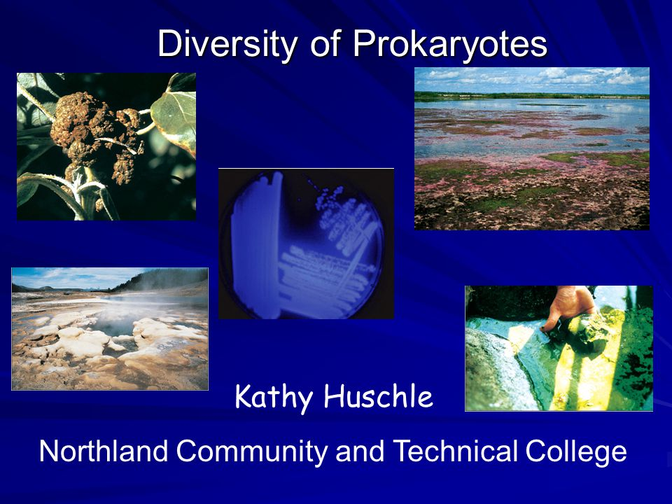 Diversity of Prokaryotes Kathy Huschle Northland Community and Technical College