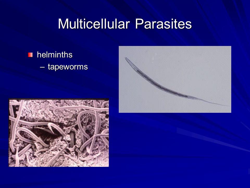 Multicellular Parasites helminths –tapeworms