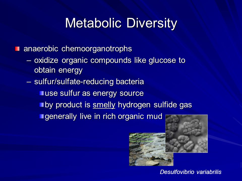 Metabolic Diversity anaerobic chemoorganotrophs –oxidize organic compounds like glucose to obtain energy –sulfur/sulfate-reducing bacteria use sulfur