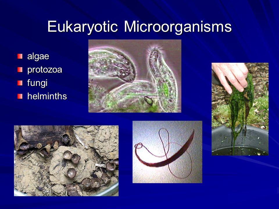 Eukaryotic Microorganisms algaeprotozoafungihelminths