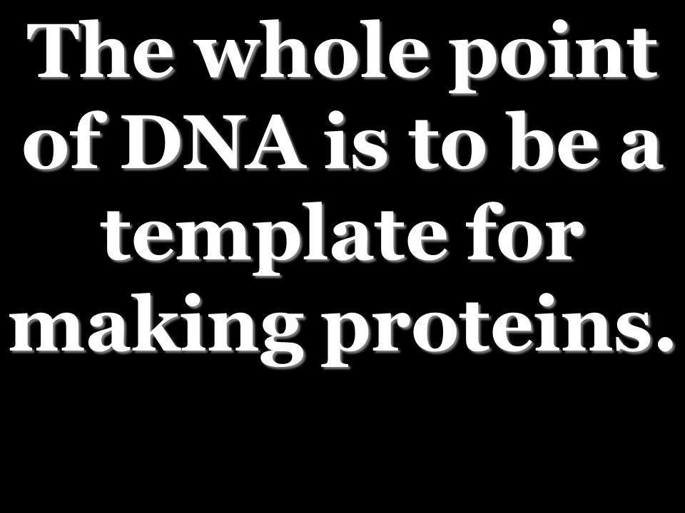 The whole point of DNA is to be a template for making proteins.