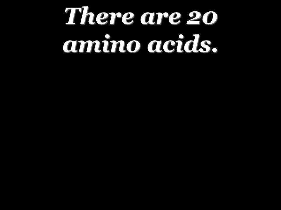 There are 20 amino acids.