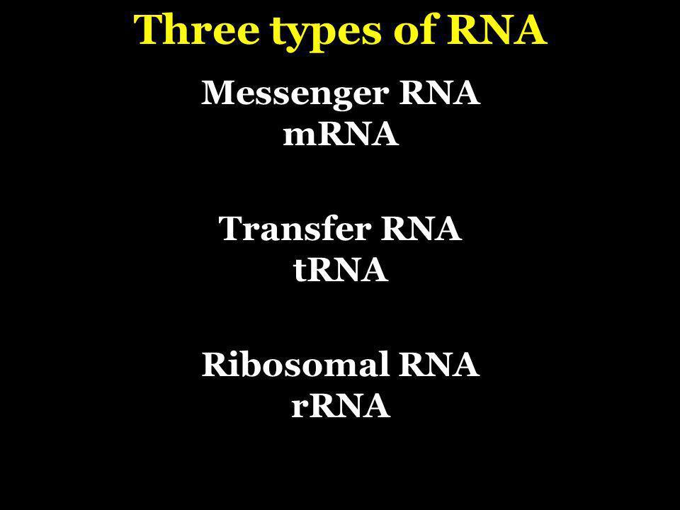 Messenger RNA mRNA Transfer RNA tRNA Ribosomal RNA rRNA