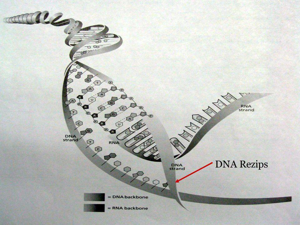 DNA Rezips