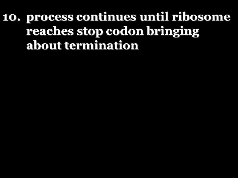 10.process continues until ribosome reaches stop codon bringing about termination