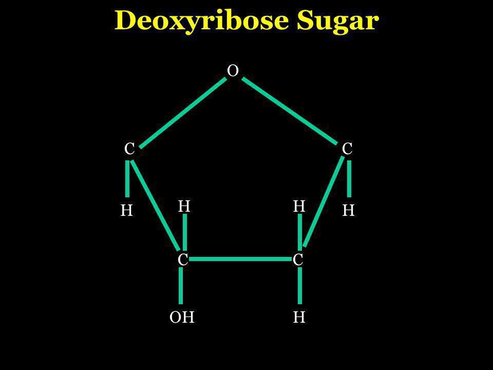 CC O CC HH H HH OH Deoxyribose Sugar