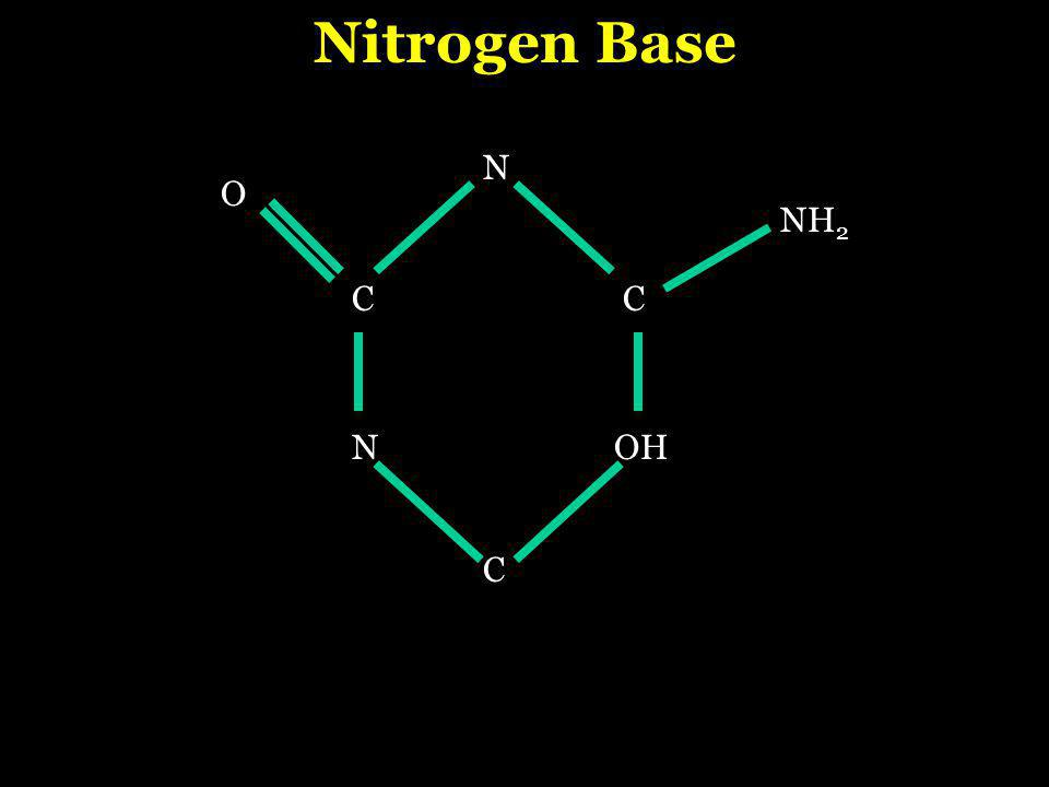 1.Deoxyribose sugar Composition of a Nucleotide 2.phosphate group 3.1 - nitrogenous base a.thymine b.adenine c.cytosine d.guanine