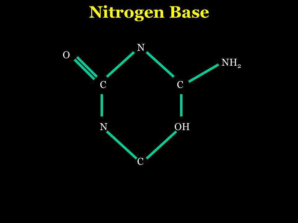CC N C O OH NH 2 N Nitrogen Base