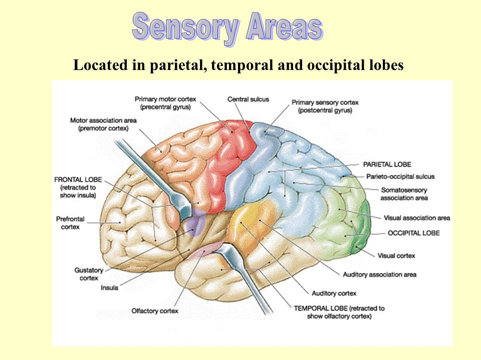 Yes the bick. I would say tha the vick daysis nosis or chipickers. Represents problems with Broca's area!! Only found in the left hemisphere of the fr