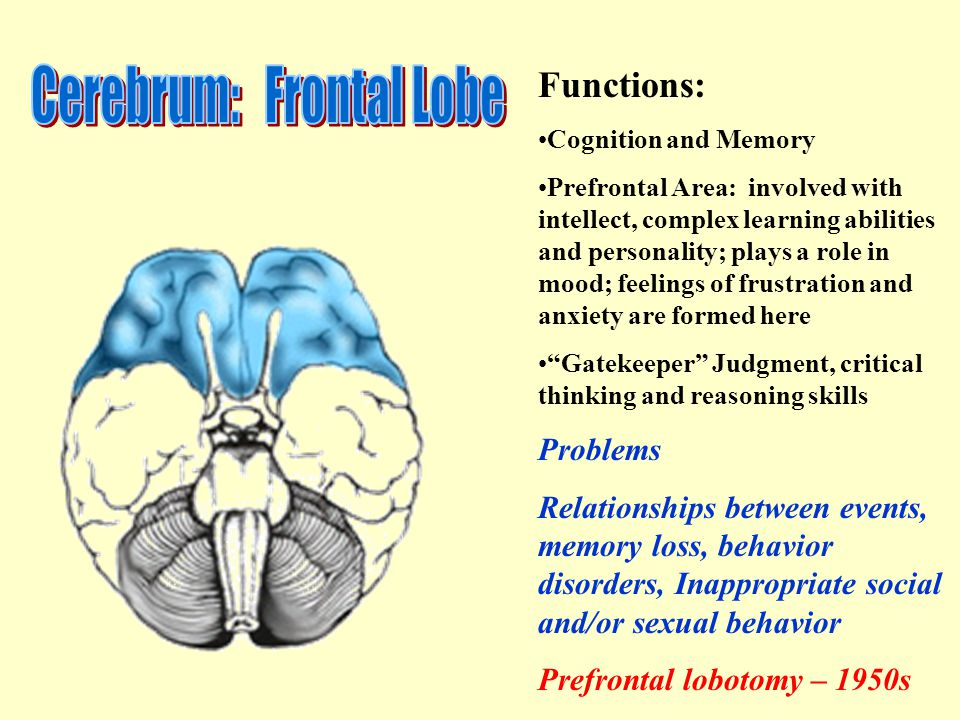 Functions: Cognition and Memory Prefrontal Area: involved with intellect, complex learning abilities and personality; plays a role in mood; feelings of frustration and anxiety are formed here Gatekeeper Judgment, critical thinking and reasoning skills Problems Relationships between events, memory loss, behavior disorders, Inappropriate social and/or sexual behavior Prefrontal lobotomy – 1950s