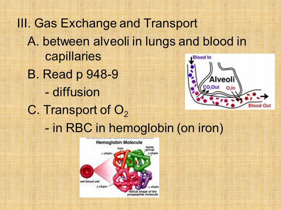 III. Gas Exchange and Transport A. between alveoli in lungs and blood in capillaries B.