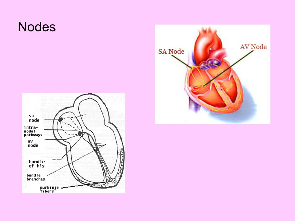 Videos Circulatory system - overview http://www.youtube.com/watch?v=D3ZDJgFDdk0 Beating heart = 15 sec http://www.youtube.com/watch?v=iX6HnUyzgQ0&feature=related Circulation http://www.youtube.com/watch?v=PgI80Ue-AMo&feature=related Pacemaker http://www.youtube.com/watch?v=tWWZKGN9h74 Circulatory sys – ties with resp http://videos.howstuffworks.com/hsw/25408-human-body-the-circulatory-system-video.htm Heart anatomy – details about valves http://www.youtube.com/watch?v=H04d3rJCLCE&feature=related Lymphatic system http://www.youtube.com/watch?v=cB5kYMmkEto&eurl=http%3A%2F%2Fvideo%2Egoogle%2Ecom% 2Fvideosearch%3Fq%3Dlymphatic%2520system%26rls%3Dcom%2Emicrosoft%3Aen%2Dus%2 6oe%3DUTF%2D8%26startIndex%3D%26st&feature=player_embedded Blood components (15 min +) good detail http://videos.howstuffworks.com/hsw/19706-blood-comparing-bloods-constituent-parts-video.htm Blood – shorter overview http://videos.howstuffworks.com/hsw/25405-human-body-blood-video.htm